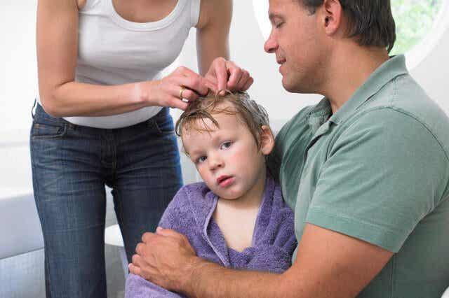 머리에 생기는 이를 예방하고 해결하는 요령 7가지
