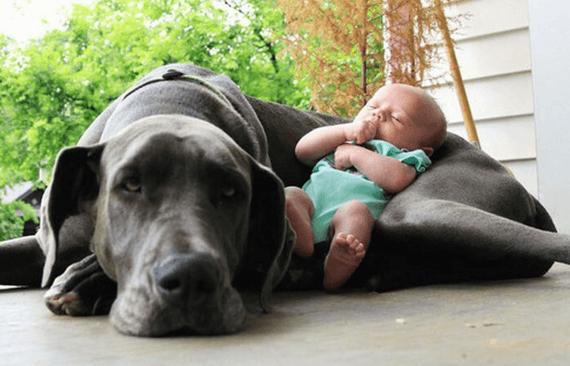 신생아를 위해 반려동물을 준비시키는 방법
