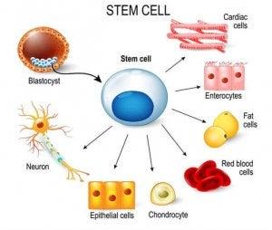 아이들에게 줄기세포를 설명하는 방법
