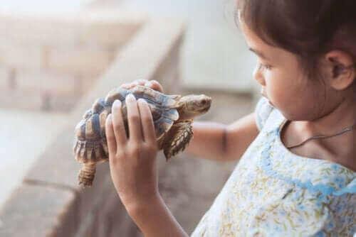 거북이 기법 사용의 이점