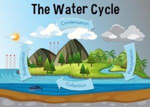 물의 순환과 그것의 여러 상태